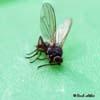 fly_1