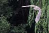 Starcul de noapte (Nycticorax nycticorax)