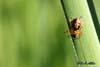 Paianjen (Arachnida)