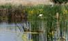 Panorama Chire