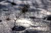 Iarna pe balta